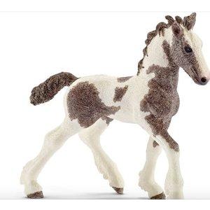 Tinker Foal