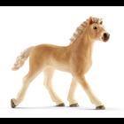 Haflinger Foal