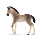 Andalusian Foal