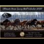 Horse Savvy Wall Calender
