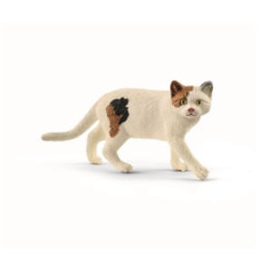 American Short Hair Cat
