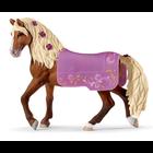 Paso Fino Stallion Horse Show