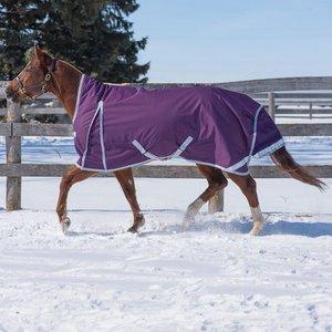 Canadian Horsewear Denali Rainsheet