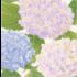 Caspari Luncheon Napkin - Hydrangea Garden Lavender