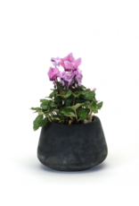 Black Concrete Planter Medium