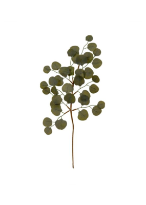 Green Eucalyptus Sprig