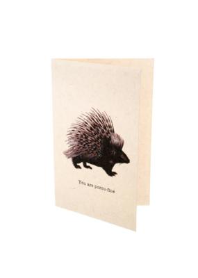 Indaba Card Porcu-Fine