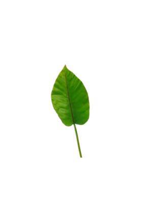 Banana Leaf Small