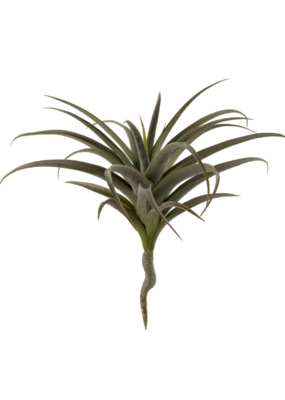 Indaba Trading Giant Air plant