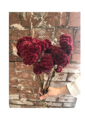 Dried Flowers - Celosia Natural Stems Burgundy