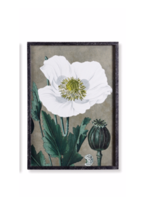 Napa Home & Garden Poppy Print II