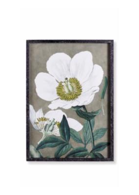 Napa Home & Garden Poppy Print I