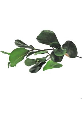 Baby FIddle Leaf Fig Spray