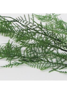 Asparagus Leaf Spray