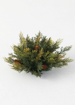 Atlantic White Cedar Clump