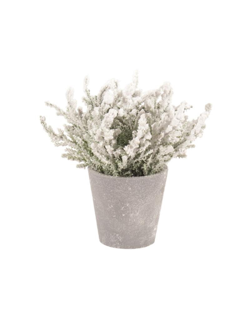 "7.5"" Floral Snowy Cedar Pot"