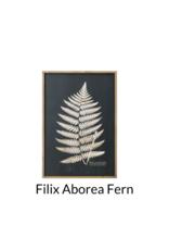 Fern Art Print in Wood Frame