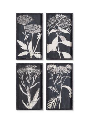 Napa Home & Garden Monochrome Queen Anne's Lace Prints