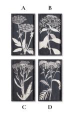 Monochrome Queen Anne's Lace Prints