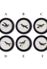 Napa Home & Garden Hummingbird Round Petite Art Prints