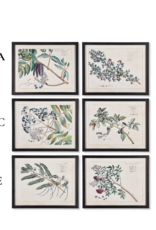 Napa Home & Garden Berry Branch Botanical  Art Prints