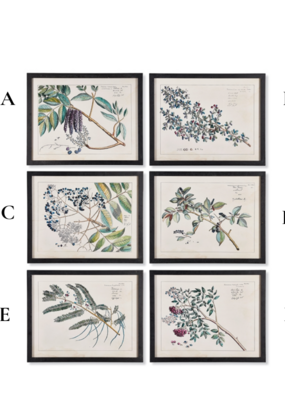 Napa Home & Garden Berry Branch Botanical  Art Prints