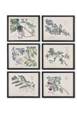 Berry Branch Botanical  Art Prints