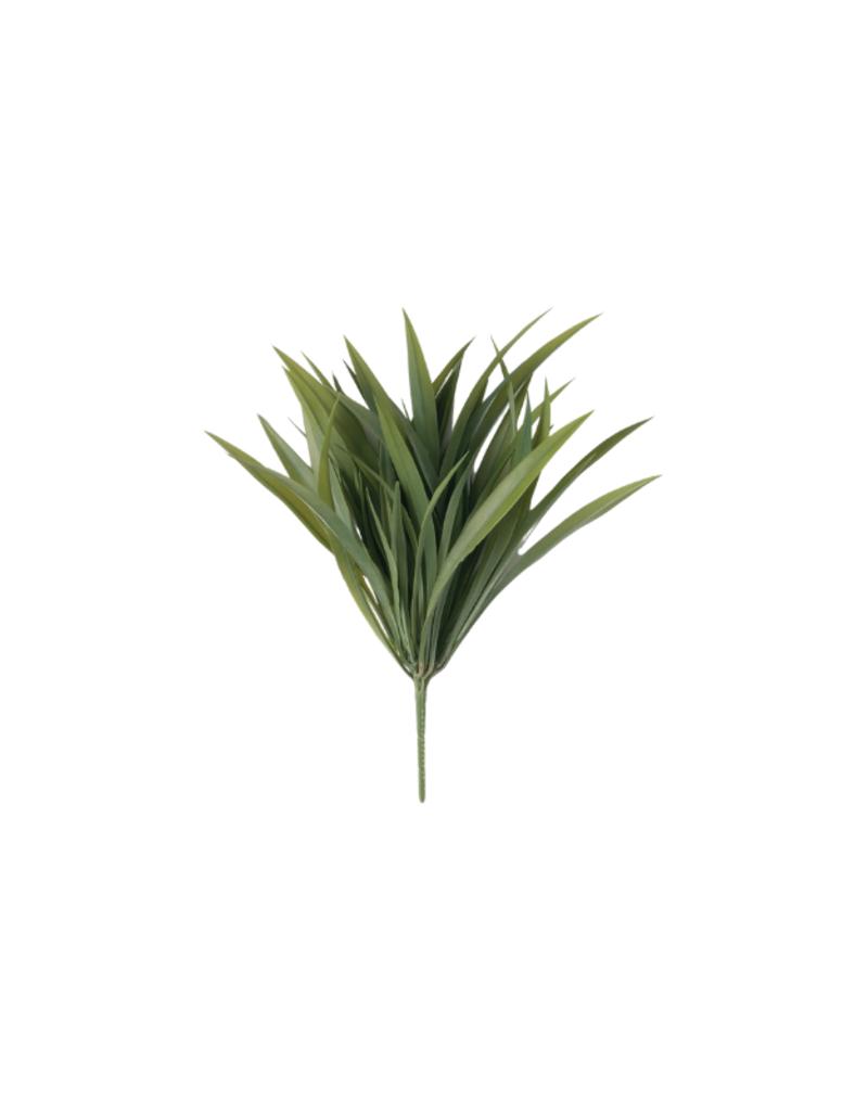 Yucca Bush
