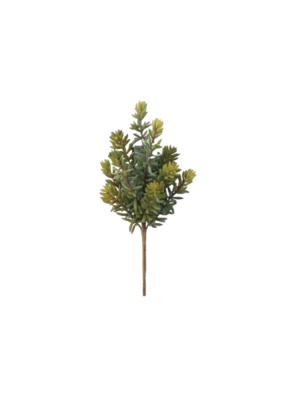 Multi-Stem Succulent Pick
