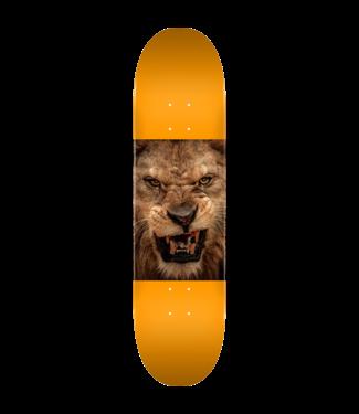 Mini Logo Animal Lion Eyes Orange 8.25