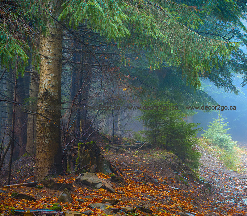 Misty Carpathian Forest
