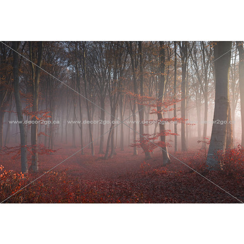 Foggy Red Forest