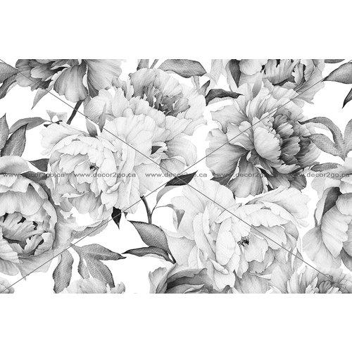 Black and White Peonies