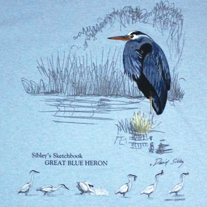 Liberty Graphics Liberty Graphics Great Blue Heron Ladies T-Shirt