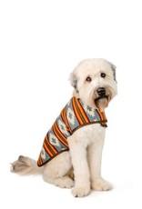 Chilly Dog Denim Sunset Dog Coat