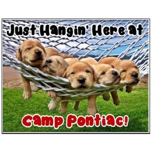 Dogs Hangin' Notecards