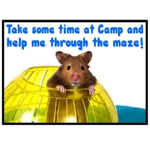 Hamster Maze Camp Card