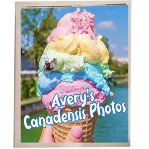 Ice Cream Photo Album