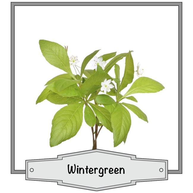 JoJo Vapes Wintergreen