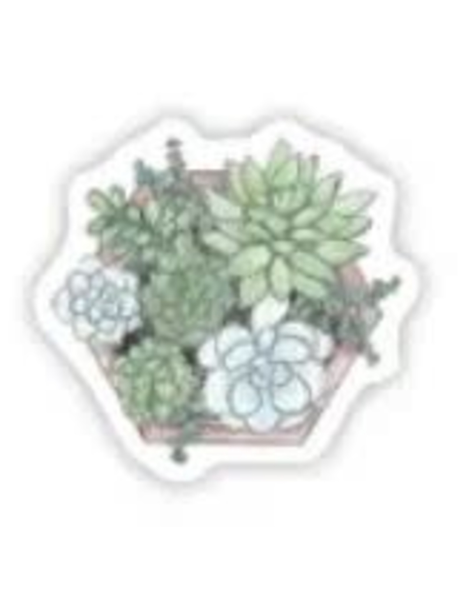 BIG MOODS SUCCULENTS IN A BOX STICKER