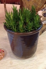 Plant, succulent, ceramic, pot, blue