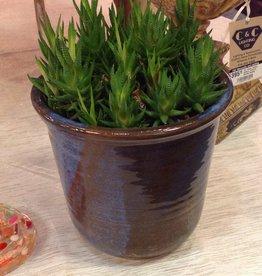 Plant, succulent, ceramic, pot, blue