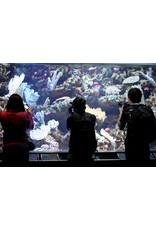 Photographers Night At The Aquarium
