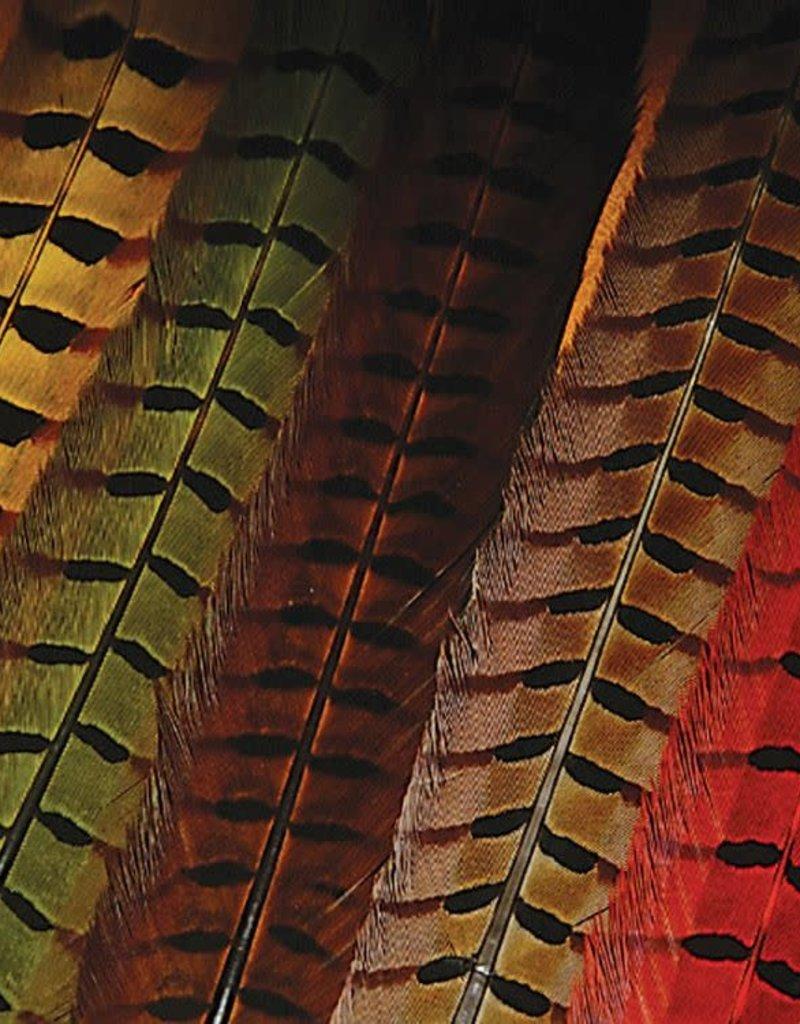 Wapsi Ringneck Pheasant Tail Feathers Pair