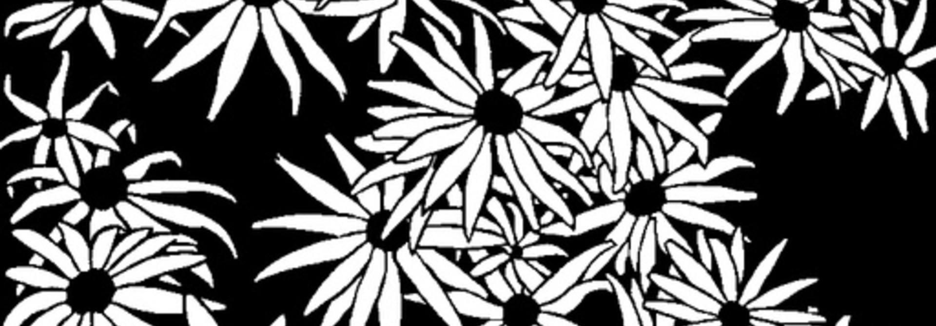 Flowers (Rudbeckia)