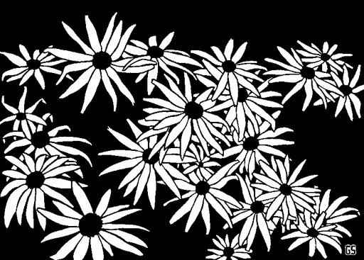 Flowers (Rudbeckia)-1