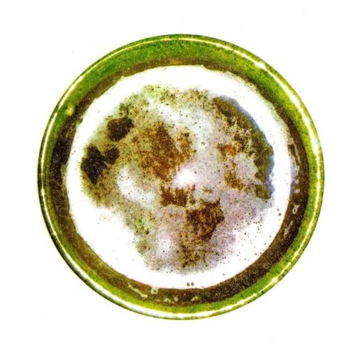 S. Cervisiae-1