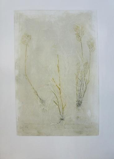 Festuca Idahoensis-1