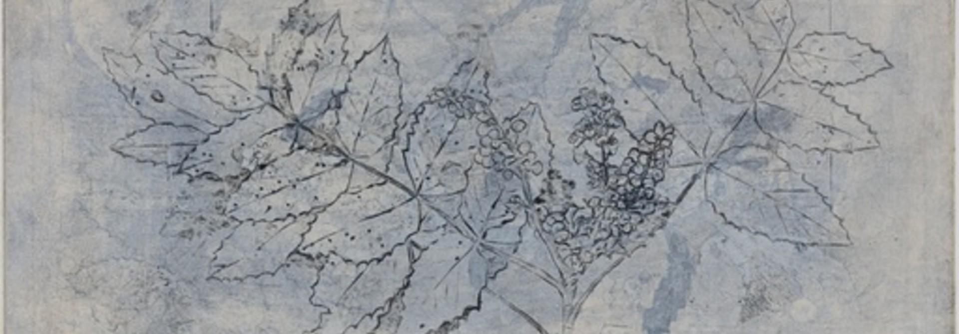 Holly-leaf Oregon Grape