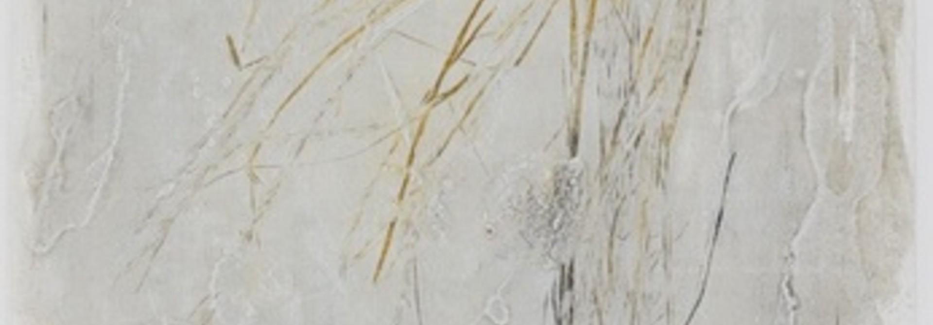 Agropyron spicatum
